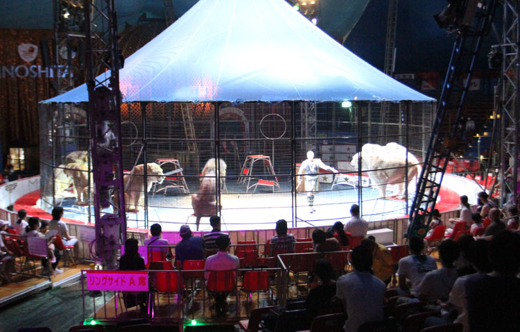 入場者数を通常の半分以下に抑えている東京・立川での公演